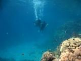 Ниряю с аквалангами Видео 1