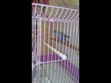 попугайга массаж 😅