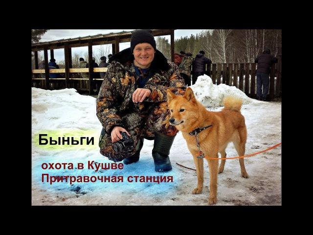 Охота в Кушве - Лайки Западно-сибирская, Карело-финская,Гончие и др.