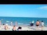 В одесской Затоке к пляжу подплыла стая дельфинов