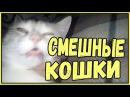 Смешные кошки приколы про кошек и котов 2017 46 Лучшее Funny Cats