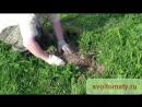 Дача сад огород Как избавиться от кротов Охота на крота