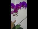 Орхидея цвет фуксия