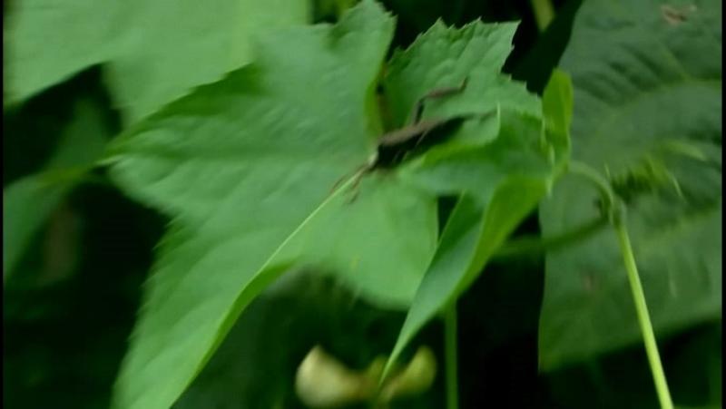 Animal Planet. Самые большие и страшные жуки в мире (2009)