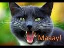 Приколы про животныхОчень смешное видео