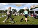 международная выставка собак всех пород, Харьков, стадион Пионер, 24062017, часть 5