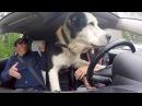Огромная Собака в ТАКСИ Мужик в шоке ФЕЙК ТАКСИ 1