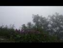 їжачок в тумані блює