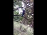 Аварец в Городском парке черешню кушает [Нетипичная Махачкала]