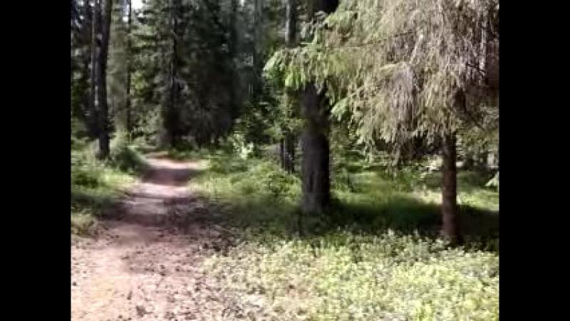 В лесу с собаками