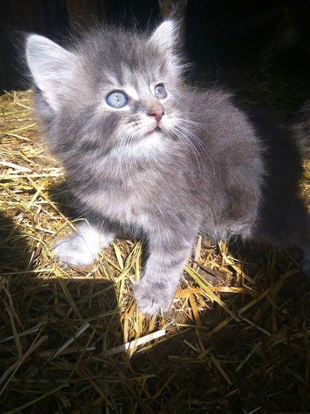 Срочно!  Отдам в добрые руки котят 3 девочки  2 месяца Добрые и ласков