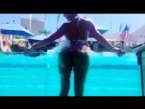 Phoenix Marie вертит жопой в бассейне