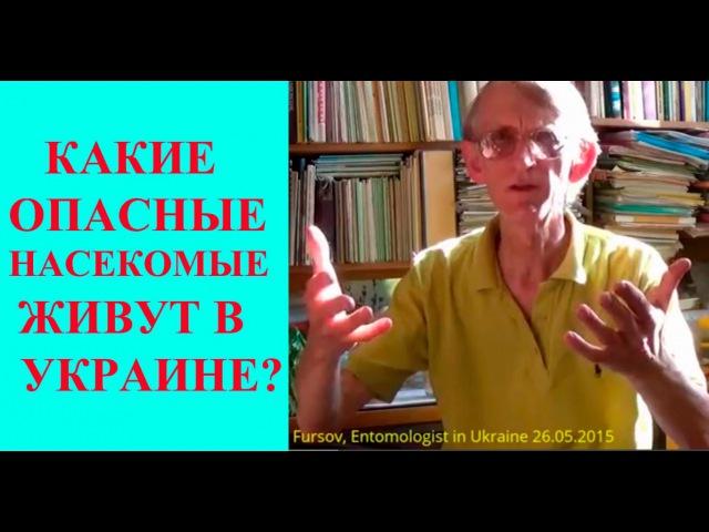ТОП-10 Опасных В Украине Насекомых, Клещей, Пауков Entomologist in Ukraine