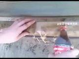 Удаление ржавчины кока колой