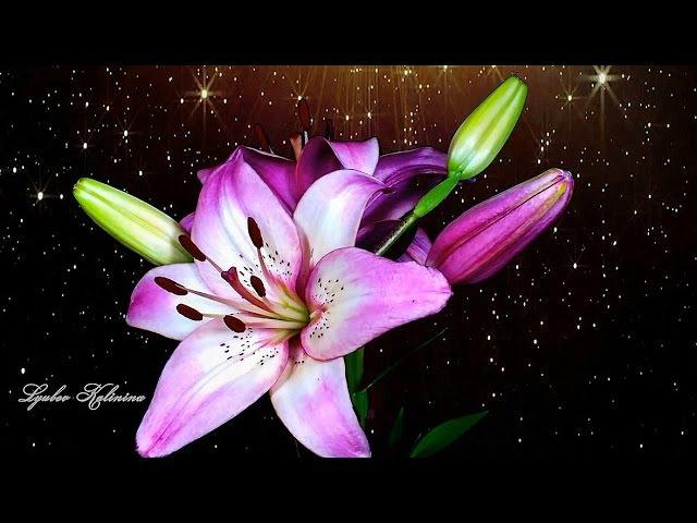 Распускающиеся цветы под красивую музыку