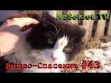 Кот ждал помощи два дня. Спасение #43.  Город Улан-Удэ.