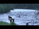 Национальный парк Катмай Аляска 23 06 2017