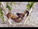 Смешные кошки приколы про кошек и котов 2017 61 Собаки и котики злые и добрые