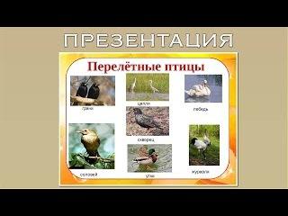 Презентация для дошкольников перелетные птицы осенью
