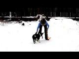 Игры с щенком. ч2. 3месяца Lumos Solem Vilka