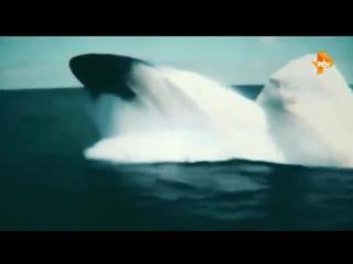 На глубине (28.04.2017. планеты.климата.экология.человечество.перенаселение.Морские монстры, подводные и подземные катаклизмы.