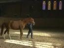 Лошадь распятая и воскресшая 2008  - см 1-ым фильмом,жёстко и правдиво о нас ,человеках