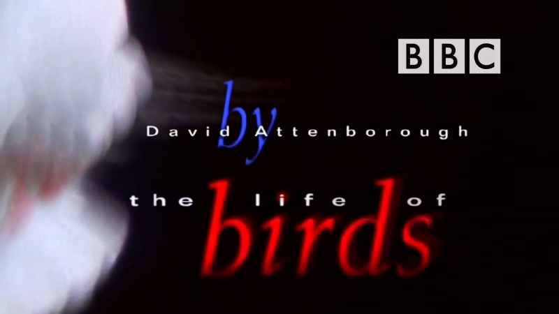 BBC Жизнь птиц (Правда о птицах) 5 серия Профессия - рыболовы / The Life of Birds (1998) Д. Аттенборо Н. Дроздов
