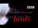 BBC Жизнь птиц Правда о птицах 5 серия Профессия рыболовы The Life of Birds 1998 Д Аттенборо Н Дроздов