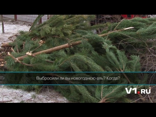 Волгоградцы надеются, что новогодние ёлки из квартир уйдут сами