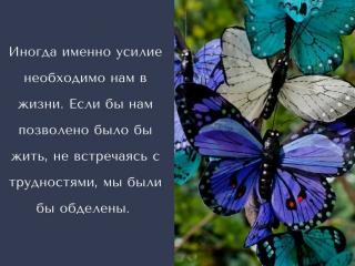 Притча урок бабочки