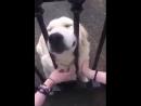 Осторожно! очень злая собака за забором)))
