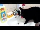 Ласковая кошечка Карамба признаёт только проточную воду!