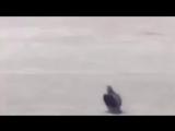 Народный Патруль. Животные на дороге