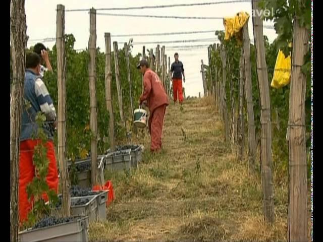 Путешествия по местам виноделия 4 Румыния
