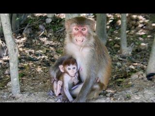 Остров Обезьян. Нячанг, Вьетнам. Monkey Island. Nha Trang, Vietnam.