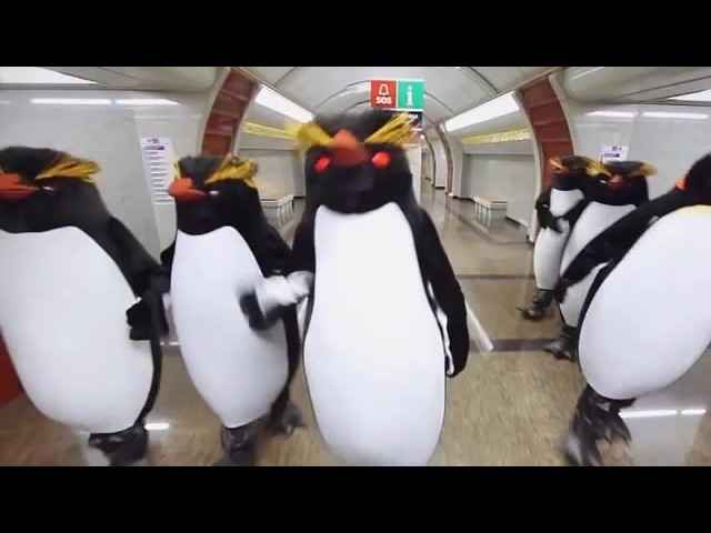The penguins of subway · coub, коуб