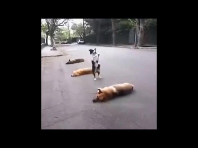 Perros más graciosos del mundo 2016 HD Videos de perros muy chistoso