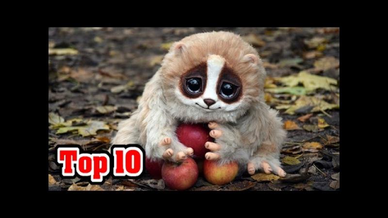 10_CUTE_Animals _That_Can_KILL_You 10_cute_animals