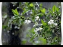У каждого дня свой аромат... Пусть сегодня пахнет свежестью