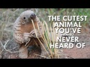 Pangolins are the Cutest Animals You've Never Heard Of