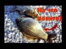 На что ловить крупного карася зимой Зимняя рыбалка на карася. СЕКРЕТЫ!