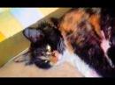У кошки Василисы на шерсти появился рисунок любимой собаки