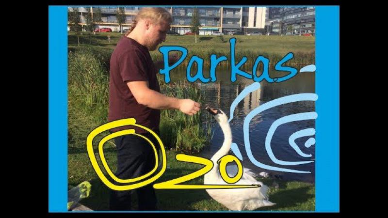 Ozo parkas Красивый лебедь Vilnius