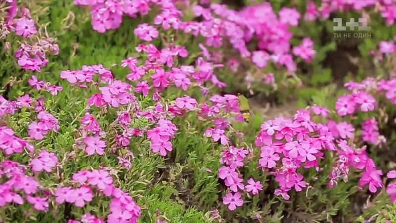История истинной любви. Сад травяной сакуры. Япония.