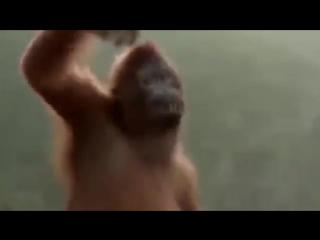 Смешное видео про обезьяну. Суббота.