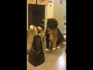 These two cats getting freaked out by a simple