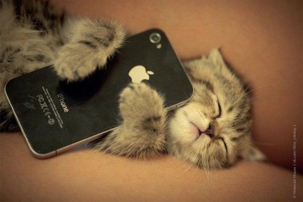 приколы для мобильного телефона дорогой ты спиш