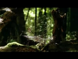 Walking with Dinosaurs - Episode 5 Spirits of the Ice Forest