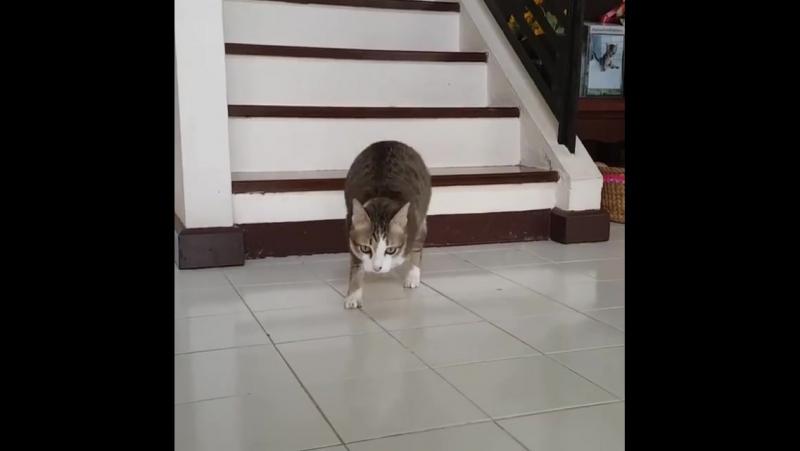 Двулапая кошка-кенгуру очаровала весь интернет