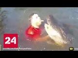Американец нырнул в пруд к аллигатору, чтобы поиграть